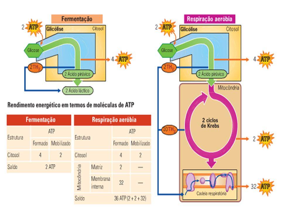 Quimiossíntese Bactérias.Não utilizam a luz solar.