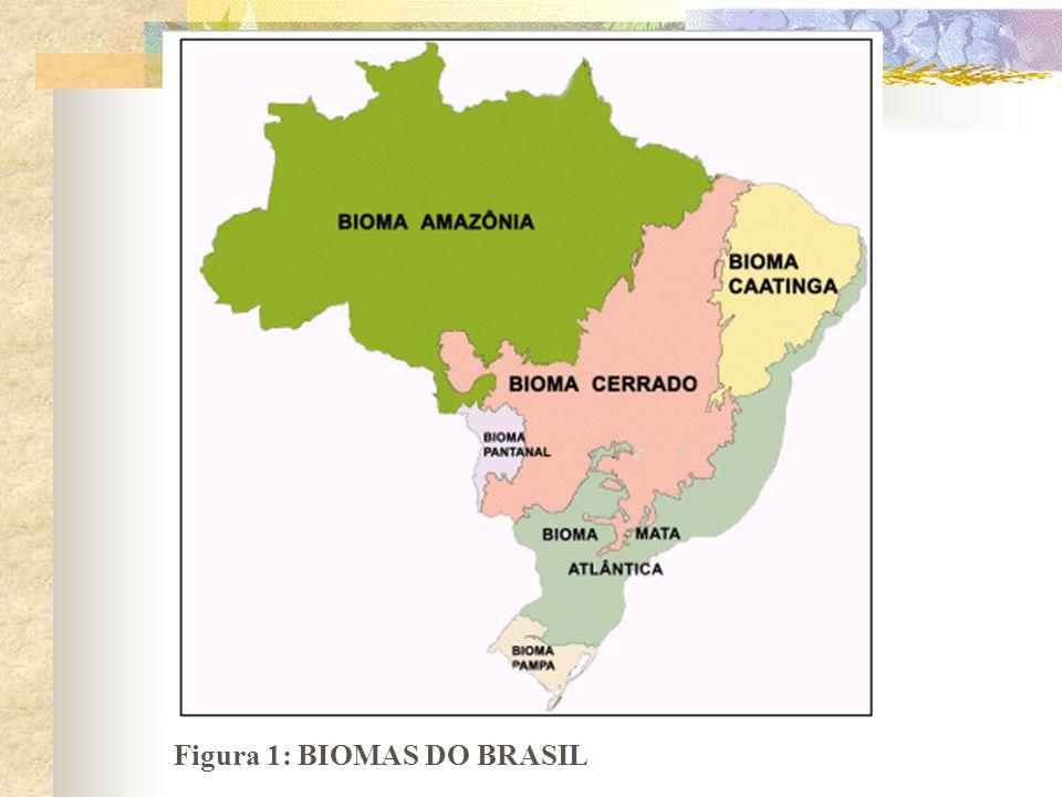 Figura 1: BIOMAS DO BRASIL