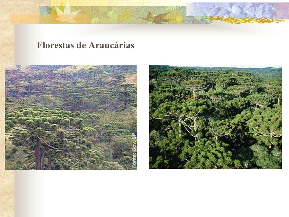 Florestas de Araucárias