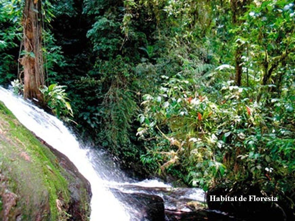 Habitat de Floresta