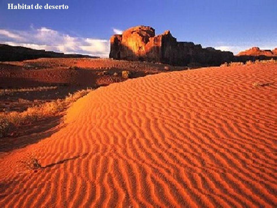 Habitat desértico Habitat de deserto