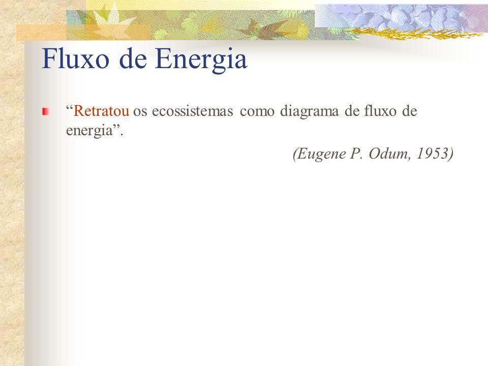 Retratou os ecossistemas como diagrama de fluxo de energia. (Eugene P. Odum, 1953) Fluxo de Energia