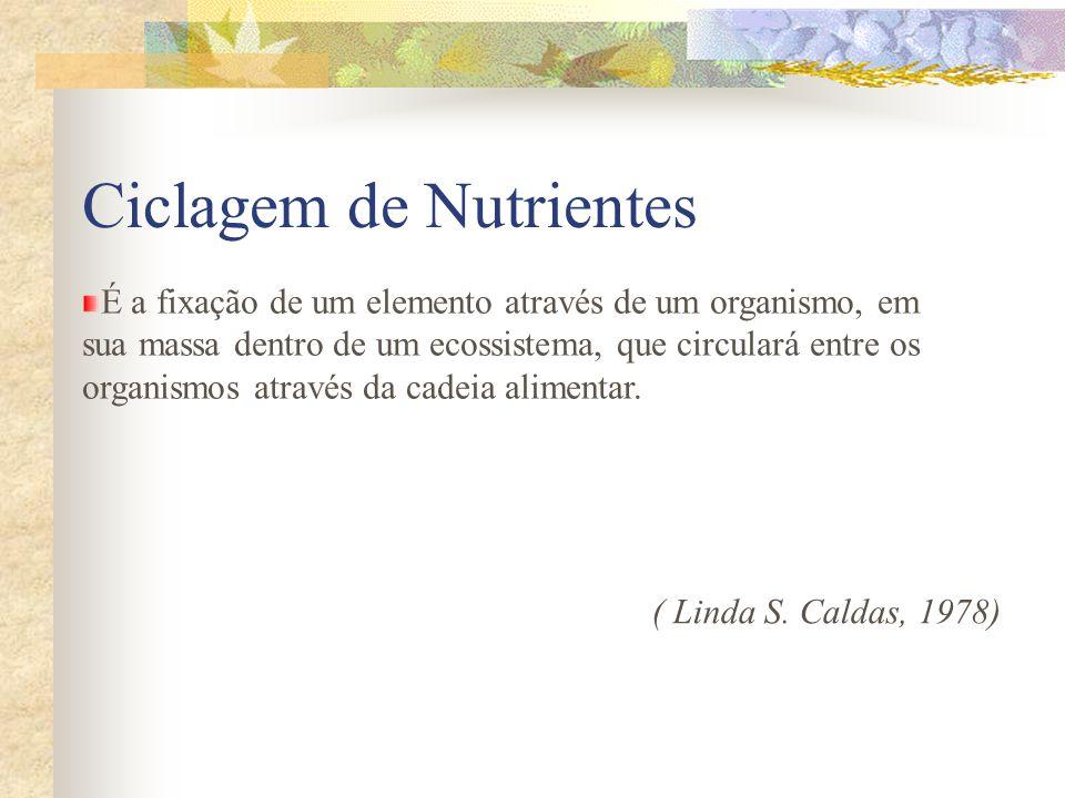 Ciclagem de Nutrientes É a fixação de um elemento através de um organismo, em sua massa dentro de um ecossistema, que circulará entre os organismos at