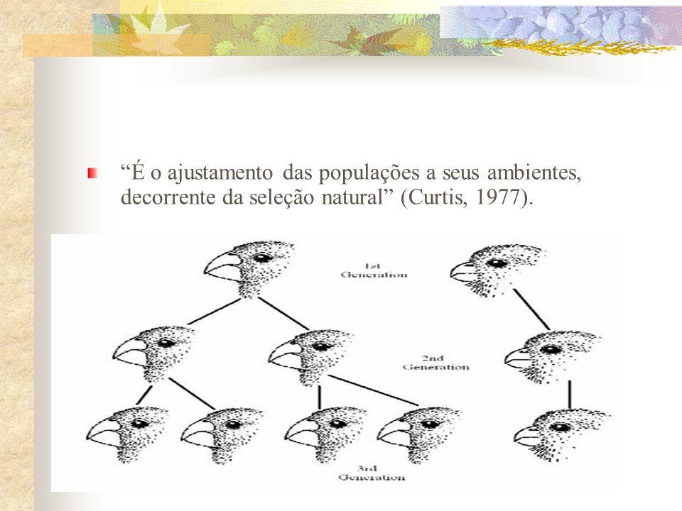 É o ajustamento das populações a seus ambientes, decorrente da seleção natural (Curtis, 1977).