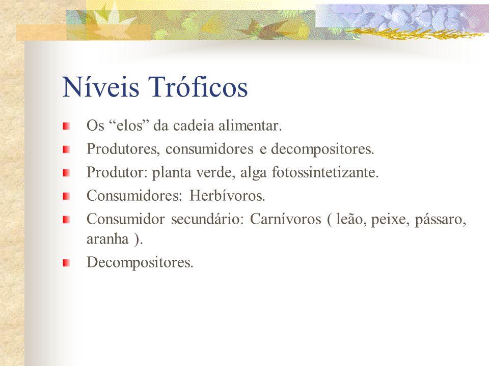Níveis Tróficos Os elos da cadeia alimentar. Produtores, consumidores e decompositores. Produtor: planta verde, alga fotossintetizante. Consumidores: