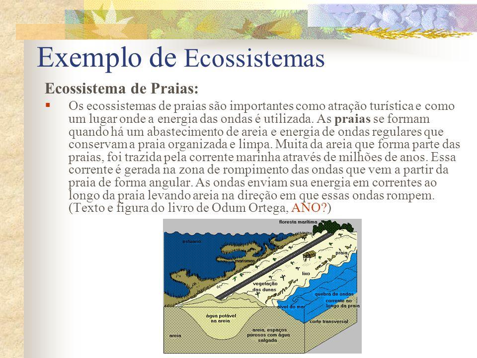 Exemplo de Ecossistemas Ecossistema de Dunas de Areia: Em direção à costa, a partir das praias, em áreas sem distúrbios, se encontram as dunas de areia.