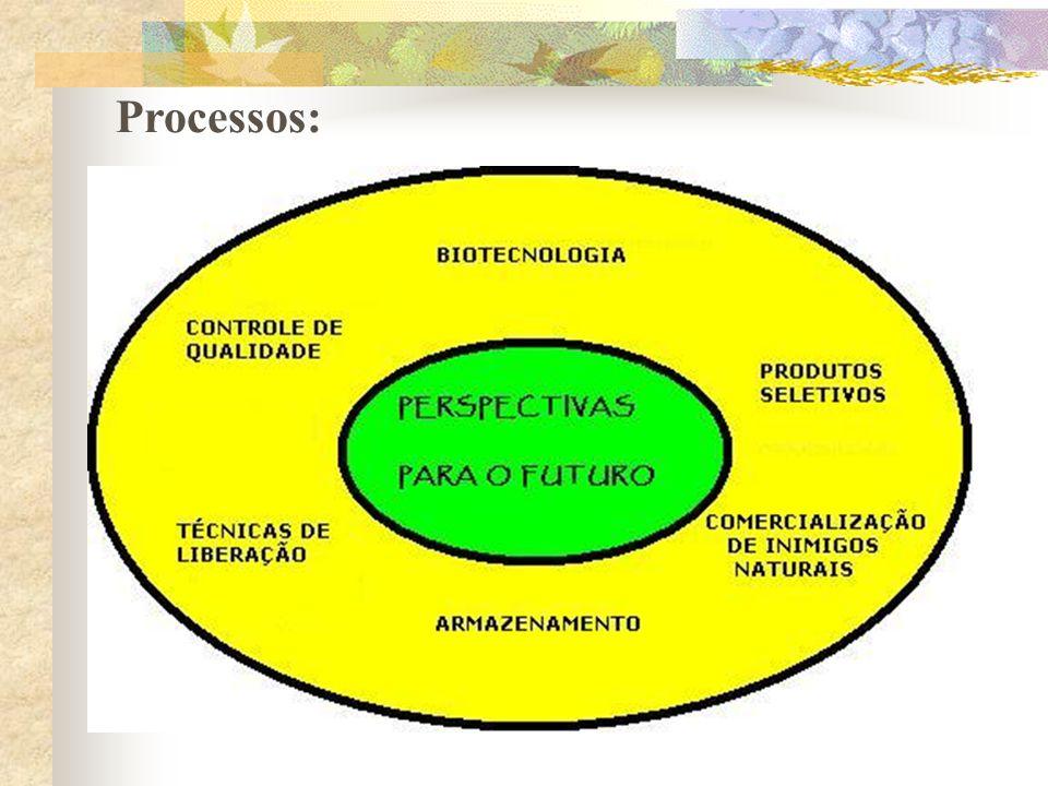 Processos: