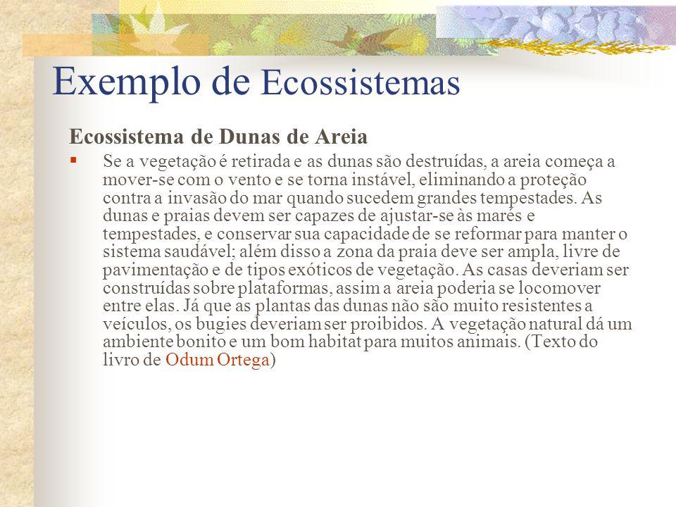 Exemplo de Ecossistemas Ecossistema de Dunas de Areia Se a vegetação é retirada e as dunas são destruídas, a areia começa a mover-se com o vento e se