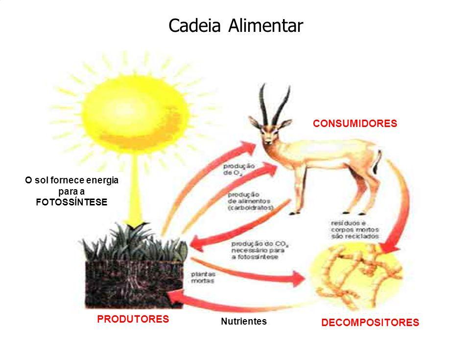 Cadeia Alimentar DECOMPOSITORES CONSUMIDORES PRODUTORES O sol fornece energia para a FOTOSSÍNTESE Nutrientes