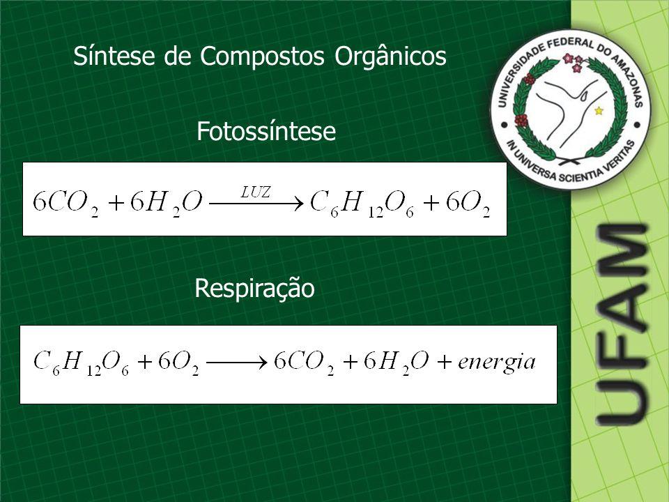 Síntese de Compostos Orgânicos Fotossíntese Respiração