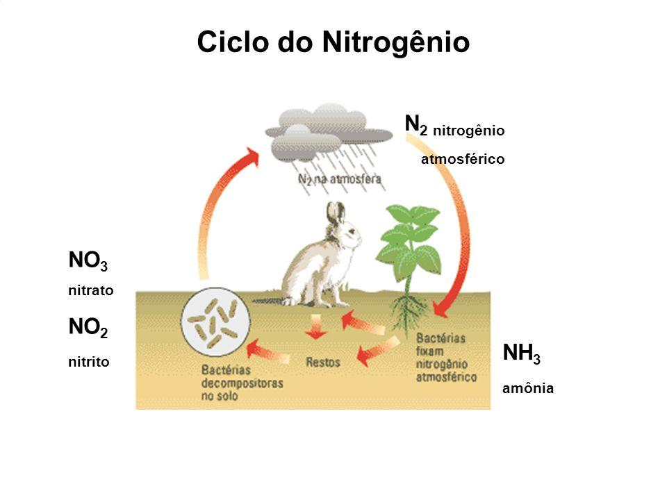 NH 3 amônia NO 3 nitrato NO 2 nitrito N 2 nitrogênio atmosférico Ciclo do Nitrogênio