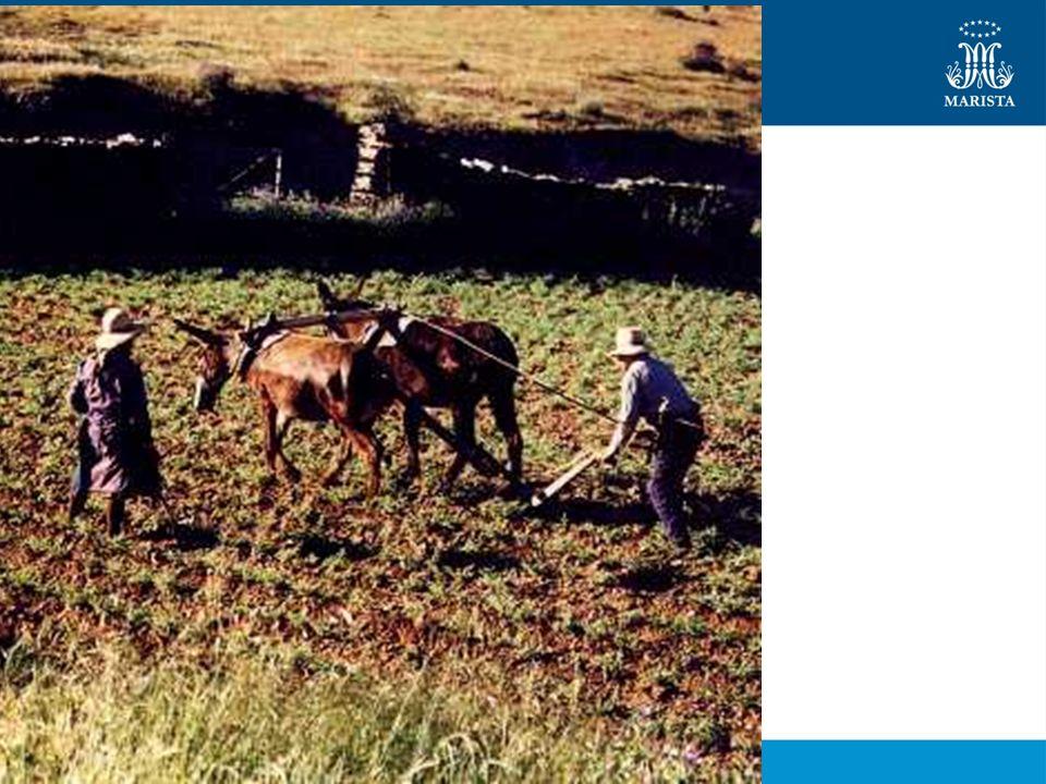 Agricultura Itinerante Há a queima das formações vegetais nativas; Solo torna-se pobre; Terra abandonada; Procura de novas áreas.