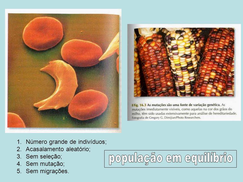 1.Número grande de indivíduos; 2.Acasalamento aleatório; 3.Sem seleção; 4.Sem mutação; 5.Sem migrações.