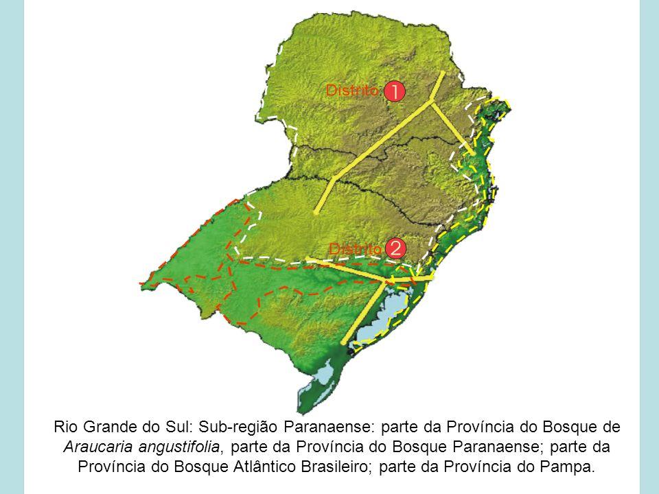 Rio Grande do Sul: Sub-região Paranaense: parte da Província do Bosque de Araucaria angustifolia, parte da Província do Bosque Paranaense; parte da Pr
