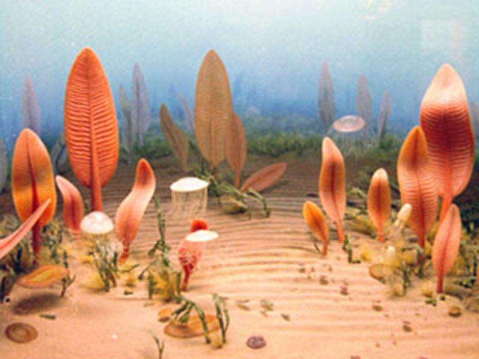 21:10:18 550.000 Fauna de Ediacara – os primeiros registros de animais Primeiro registro de vida animal: medusas, anelídeos, estrela-do-mar, ouriço-do