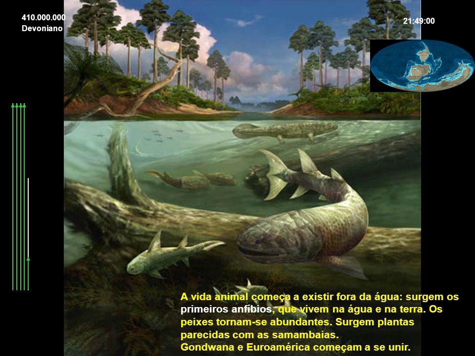 A vida animal começa a existir fora da água: surgem os primeiros anfíbios, que vivem na água e na terra. Os peixes tornam-se abundantes. Surgem planta