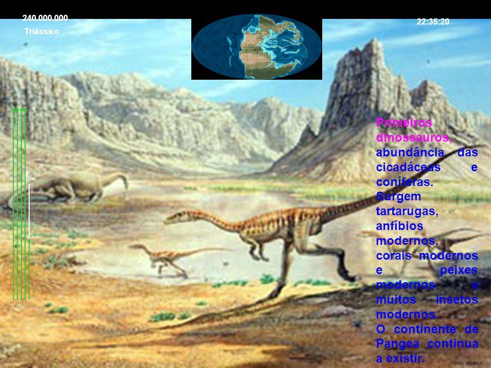 22:35:20 Triássico 240.000.000 Primeiros dinossauros, abundância das cicadáceas e coníferas. Surgem tartarugas, anfíbios modernos, corais modernos e p