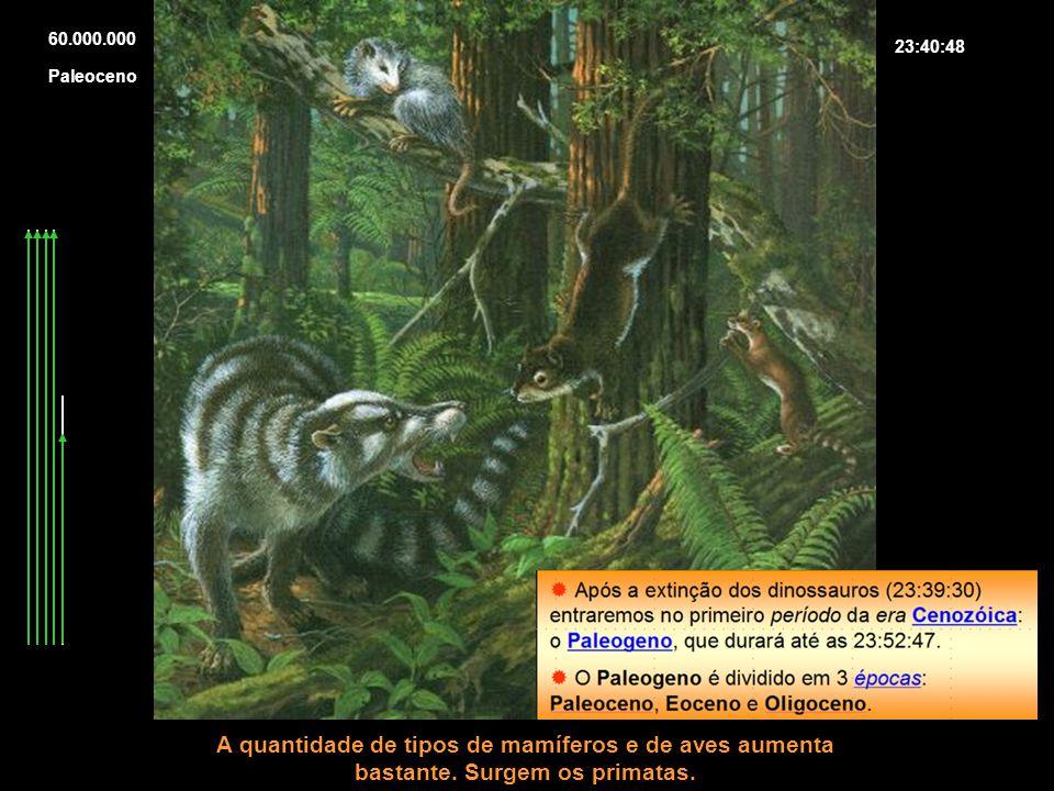60.000.000 23:40:48 A quantidade de tipos de mamíferos e de aves aumenta bastante. Surgem os primatas. Paleoceno