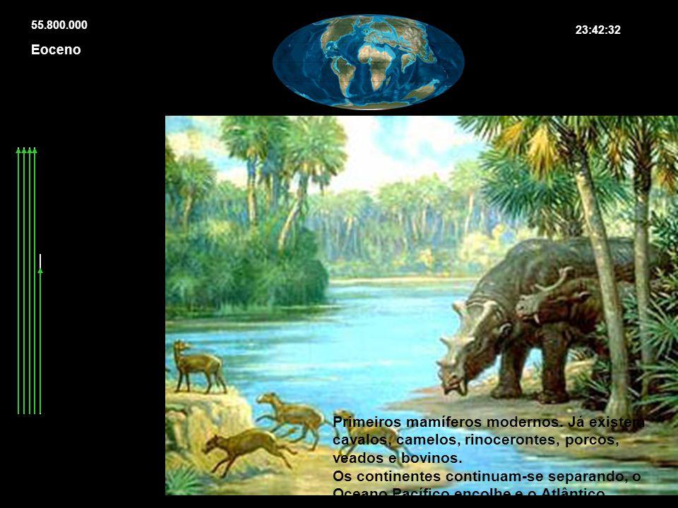 Primeiros mamíferos modernos. Já existem cavalos, camelos, rinocerontes, porcos, veados e bovinos. Os continentes continuam-se separando, o Oceano Pac