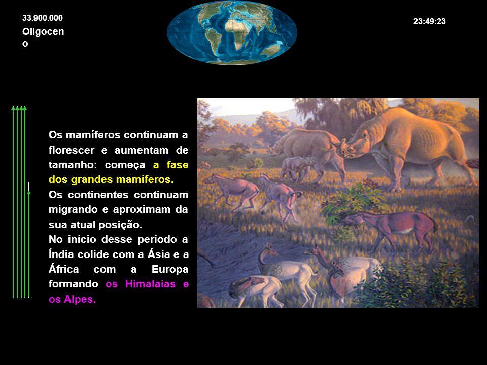 Os mamíferos continuam a florescer e aumentam de tamanho: começa a fase dos grandes mamíferos. Os continentes continuam migrando e aproximam da sua at