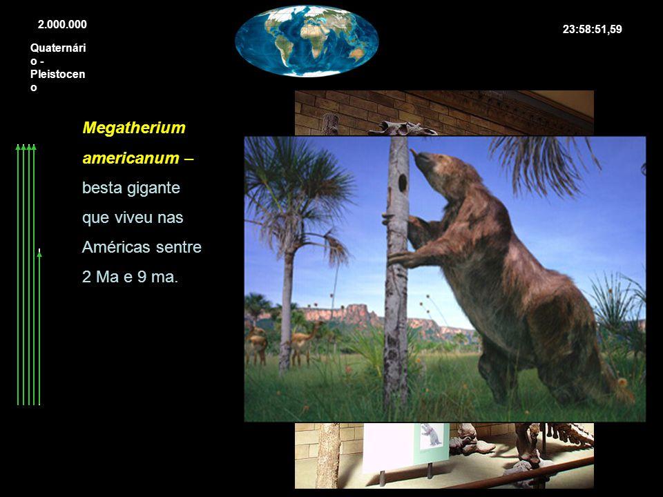 Quaternári o - Pleistocen o 2.000.000 Megatherium americanum – besta gigante que viveu nas Américas sentre 2 Ma e 9 ma. 23:58:51,59