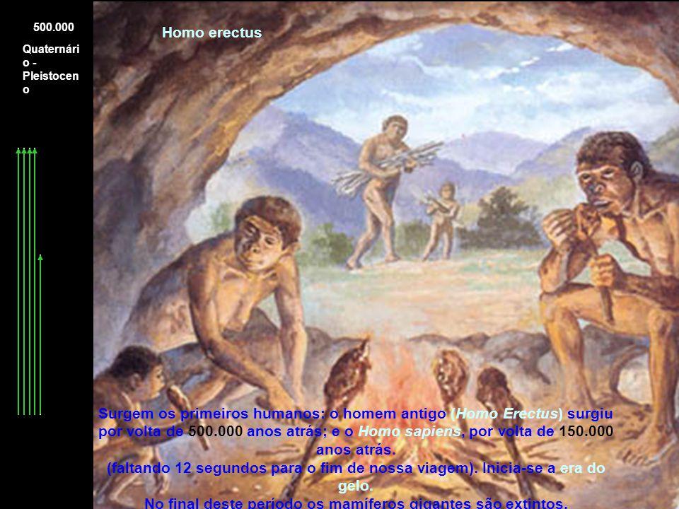 Quaternári o - Pleistocen o 500.000 Homo erectus Surgem os primeiros humanos: o homem antigo (Homo Erectus) surgiu por volta de 500.000 anos atrás; e