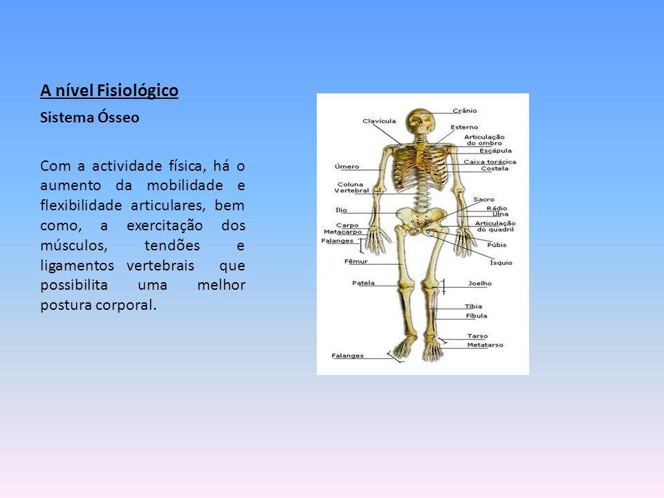 A nível Fisiológico Sistema Ósseo Com a actividade física, há o aumento da mobilidade e flexibilidade articulares, bem como, a exercitação dos músculo