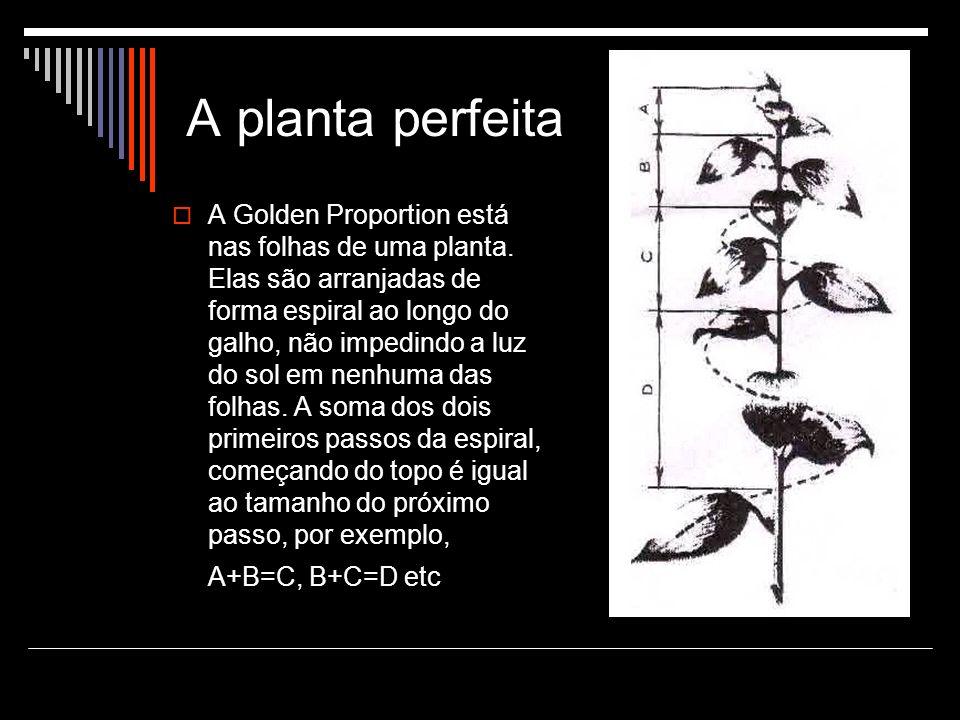 A planta perfeita A Golden Proportion está nas folhas de uma planta.