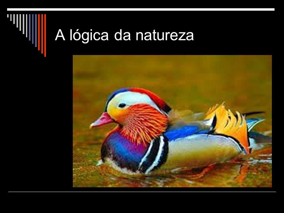 A lógica da natureza