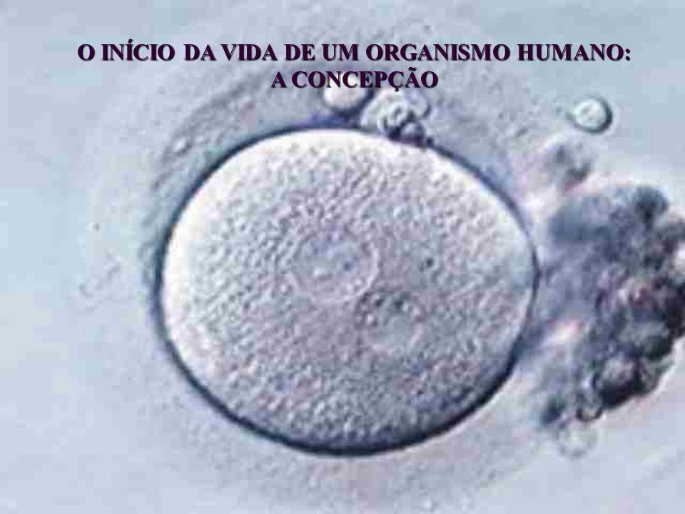 2 A ORIGEM DO SER HUMANO DE ACORDO COM A EMBRIOLOGIA: QUESTÃO FUNDAMENTAL DA CONCEPÇÃO CONHECIDA PELA CIÊNCIA DESDE O SÉCULO XIX 1827: Karl Ernst von Baer, o pai da embriologia moderna, observou o ovo ou zigoto em divisão na tuba uterina e o blastocisto no útero de animais.
