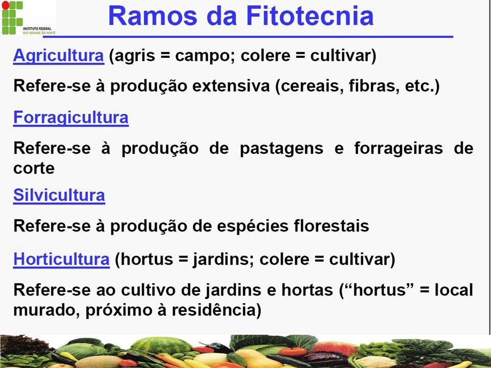 Nos sistemas AGROFLORESTAIS de alta diversidade convivem na mesma área plantas frutíferas,madeireiras, graníferas, ornamentais, medicinais e forrageiras.