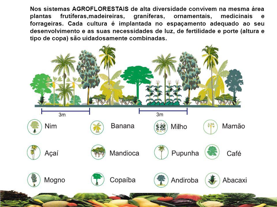 Nos sistemas AGROFLORESTAIS de alta diversidade convivem na mesma área plantas frutíferas,madeireiras, graníferas, ornamentais, medicinais e forrageir