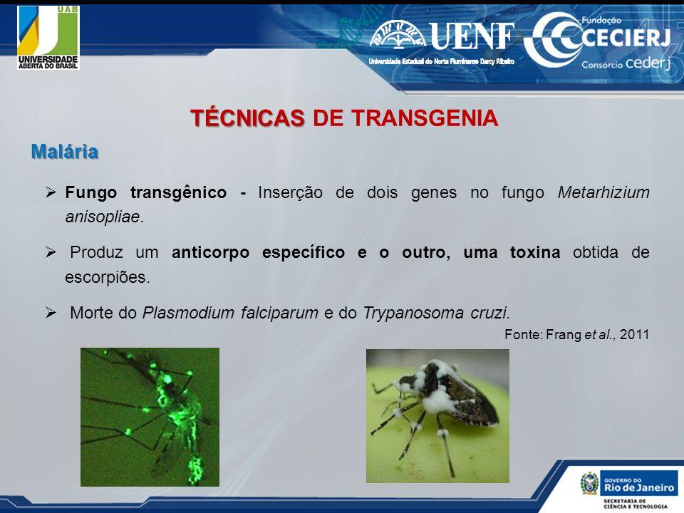 Fungo transgênico - Inserção de dois genes no fungo Metarhizium anisopliae. Produz um anticorpo específico e o outro, uma toxina obtida de escorpiões.