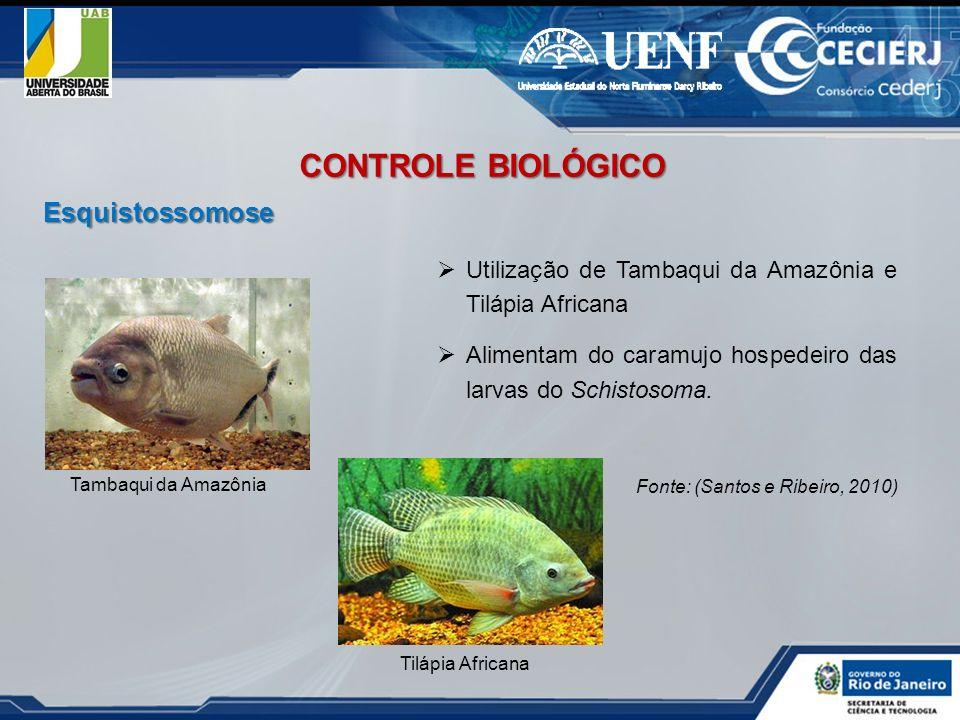 Utilização de Tambaqui da Amazônia e Tilápia Africana Alimentam do caramujo hospedeiro das larvas do Schistosoma. Fonte: (Santos e Ribeiro, 2010) Tamb