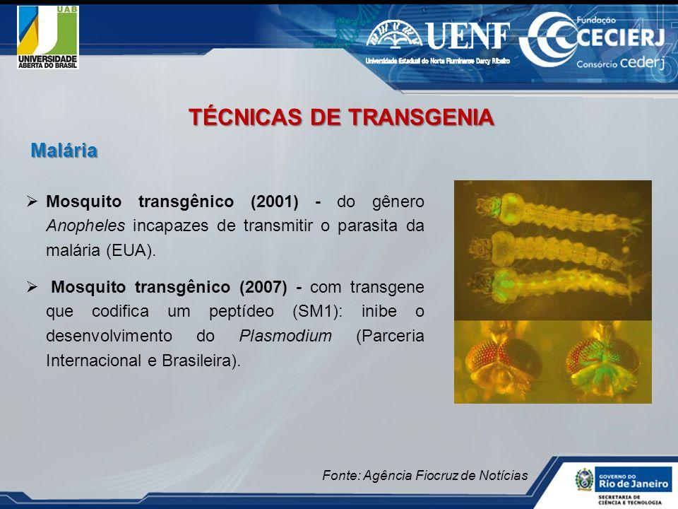 Mosquito transgênico (2001) - do gênero Anopheles incapazes de transmitir o parasita da malária (EUA). Mosquito transgênico (2007) - com transgene que