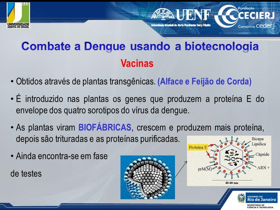 Vacinas Obtidos através de plantas transgênicas. (Alface e Feijão de Corda) É introduzido nas plantas os genes que produzem a proteína E do envelope d