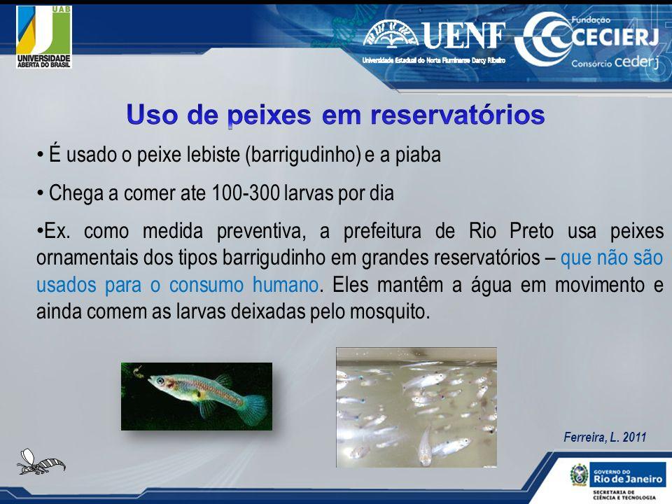 É usado o peixe lebiste (barrigudinho) e a piaba Chega a comer ate 100-300 larvas por dia Ex. como medida preventiva, a prefeitura de Rio Preto usa pe