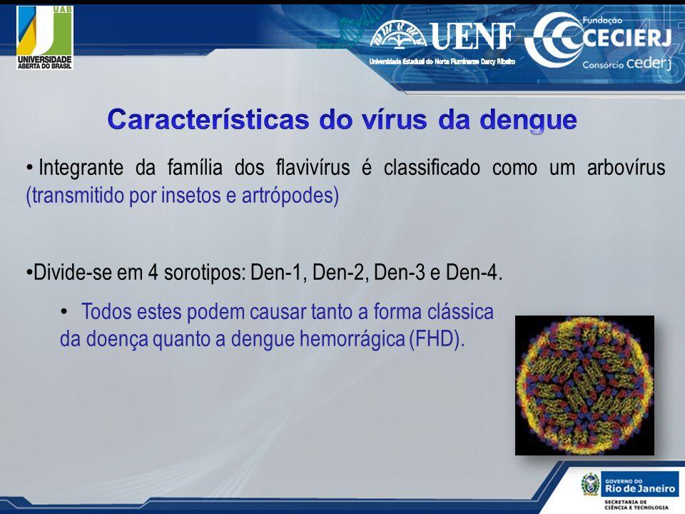 Integrante da família dos flavivírus é classificado como um arbovírus (transmitido por insetos e artrópodes) Divide-se em 4 sorotipos: Den-1, Den-2, D