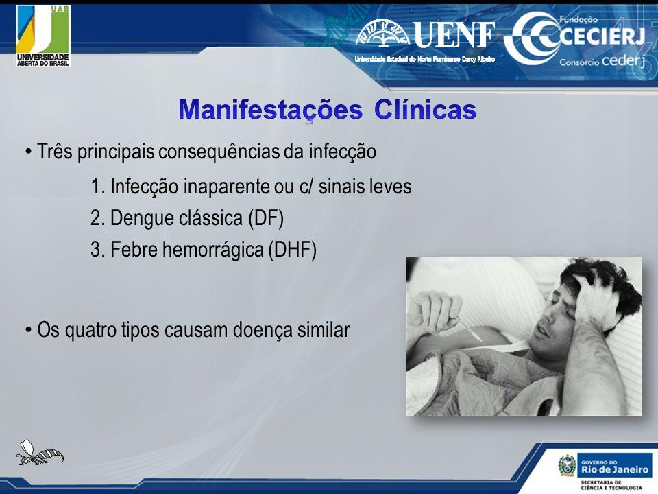 Três principais consequências da infecção 1. Infecção inaparente ou c/ sinais leves 2. Dengue clássica (DF) 3. Febre hemorrágica (DHF) Os quatro tipos