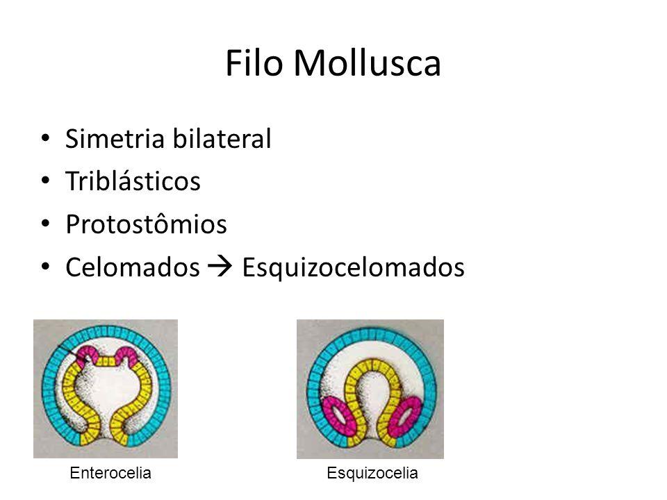 Simetria bilateral Triblásticos Protostômios Celomados Esquizocelomados EsquizoceliaEnterocelia
