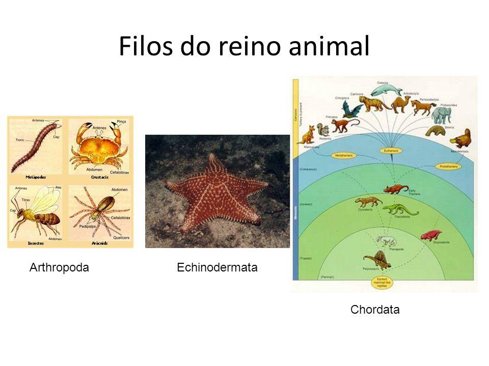 Filos do reino animal ArthropodaEchinodermata Chordata