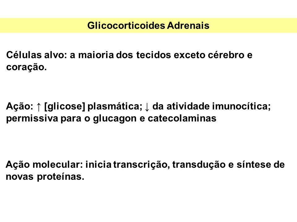 Glicocorticoides Adrenais Células alvo: a maioria dos tecidos exceto cérebro e coração. Ação molecular: inicia transcrição, transdução e síntese de no