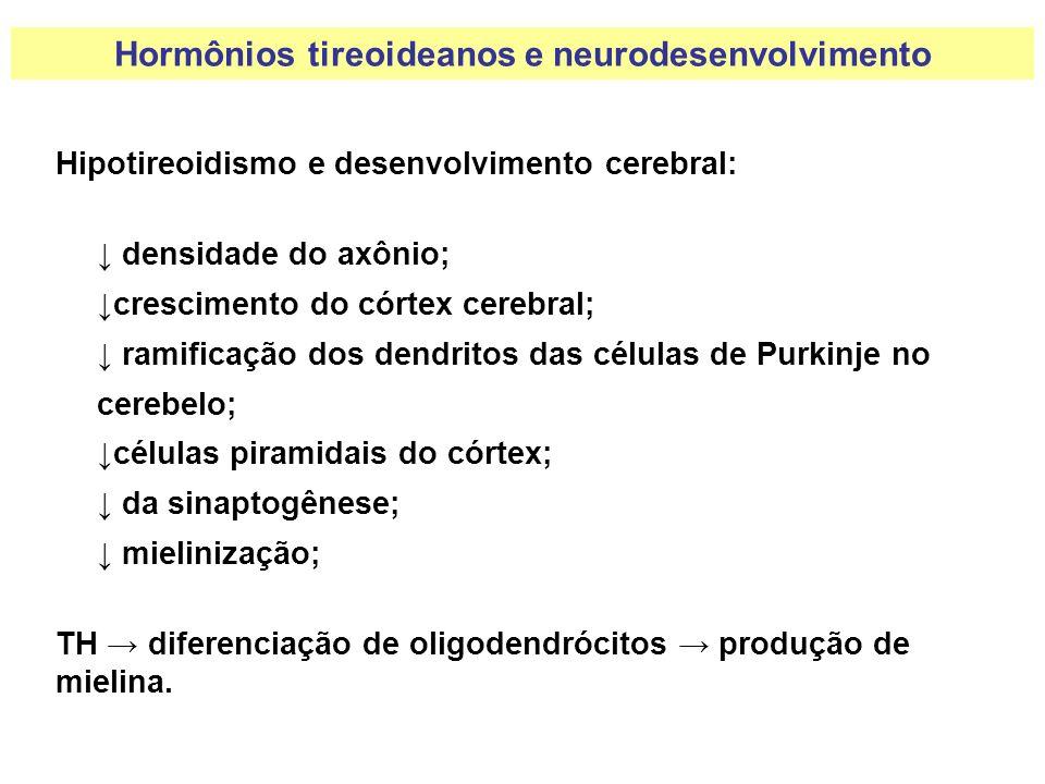 Hipotireoidismo e desenvolvimento cerebral: densidade do axônio; crescimento do córtex cerebral; ramificação dos dendritos das células de Purkinje no