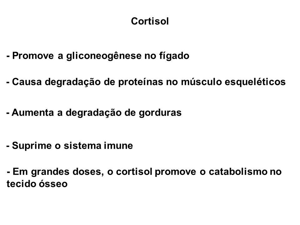 Cortisol - Promove a gliconeogênese no fígado - Causa degradação de proteínas no músculo esqueléticos - Aumenta a degradação de gorduras - Suprime o s