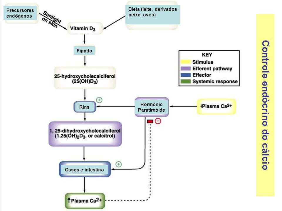 Controle endócrino do cálcio Precursores endógenos Dieta (leite, derivados peixe, ovos) Fígado Rins Hormônio Paratireóide Ossos e intestino