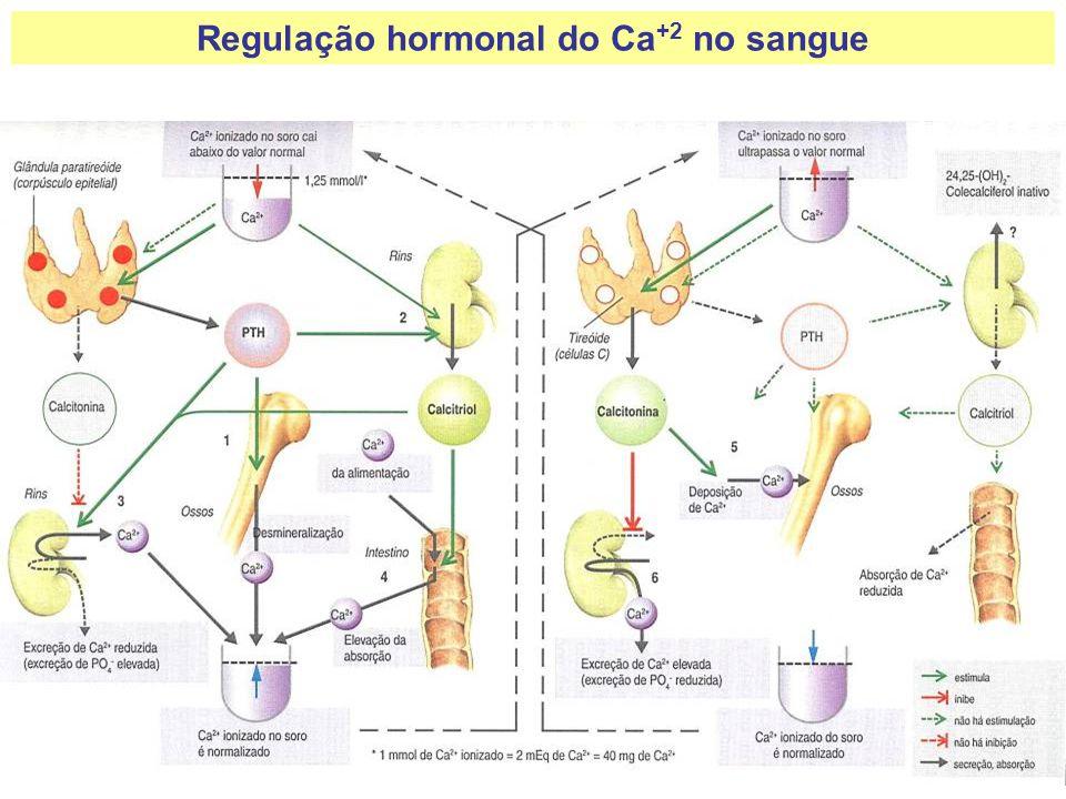 Regulação hormonal do Ca +2 no sangue