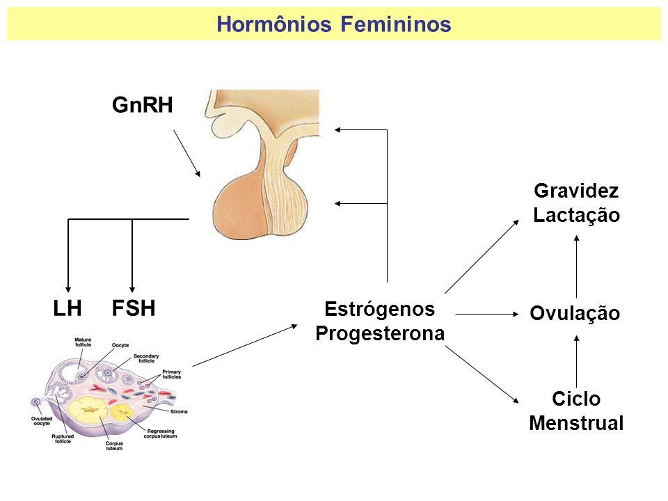 Hormônios Femininos GnRH LHFSH Estrógenos Progesterona Ovulação Ciclo Menstrual Gravidez Lactação