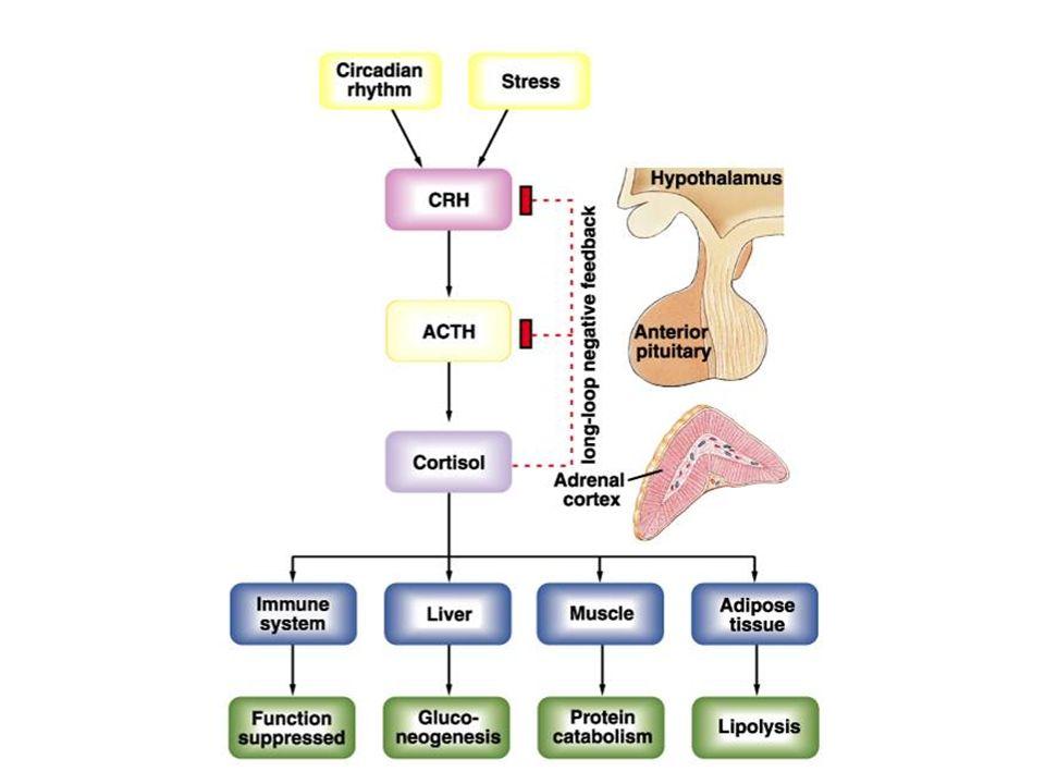 Metabolismo de carboidrato Deficiência Excesso da gliconeogênese da utilização da glicose da sensib.