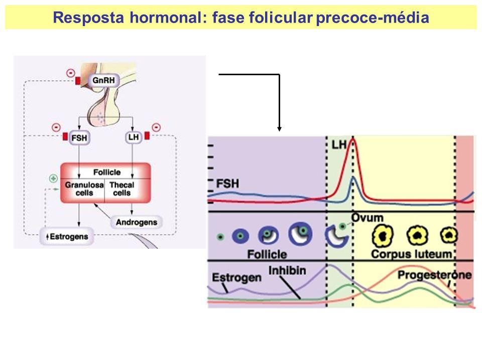 Resposta hormonal: fase folicular precoce-média