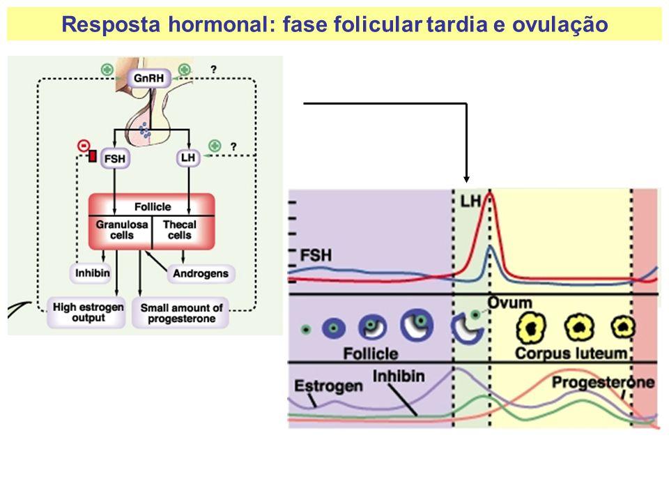 Resposta hormonal: fase folicular tardia e ovulação